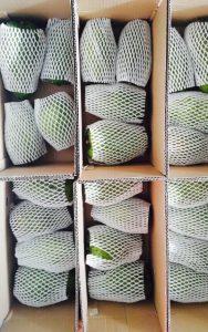 cung cap thung carton